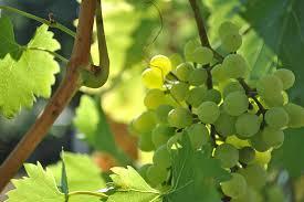 Suché bílé víno si můžete dát letnímu obědu i popíjet celý večer s přáteli